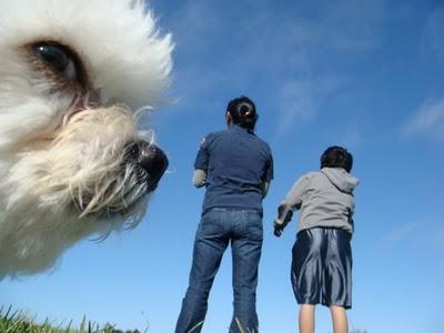 Attaquées par un chien géant