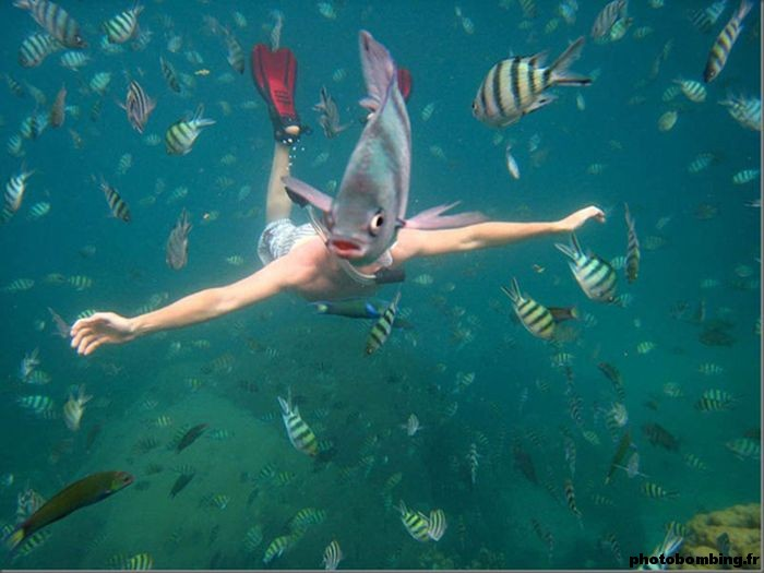 photobombing animal poisson